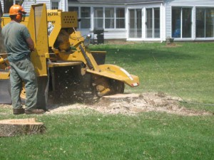 Stump Grinding in Moorpark