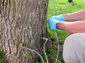 tree-injection